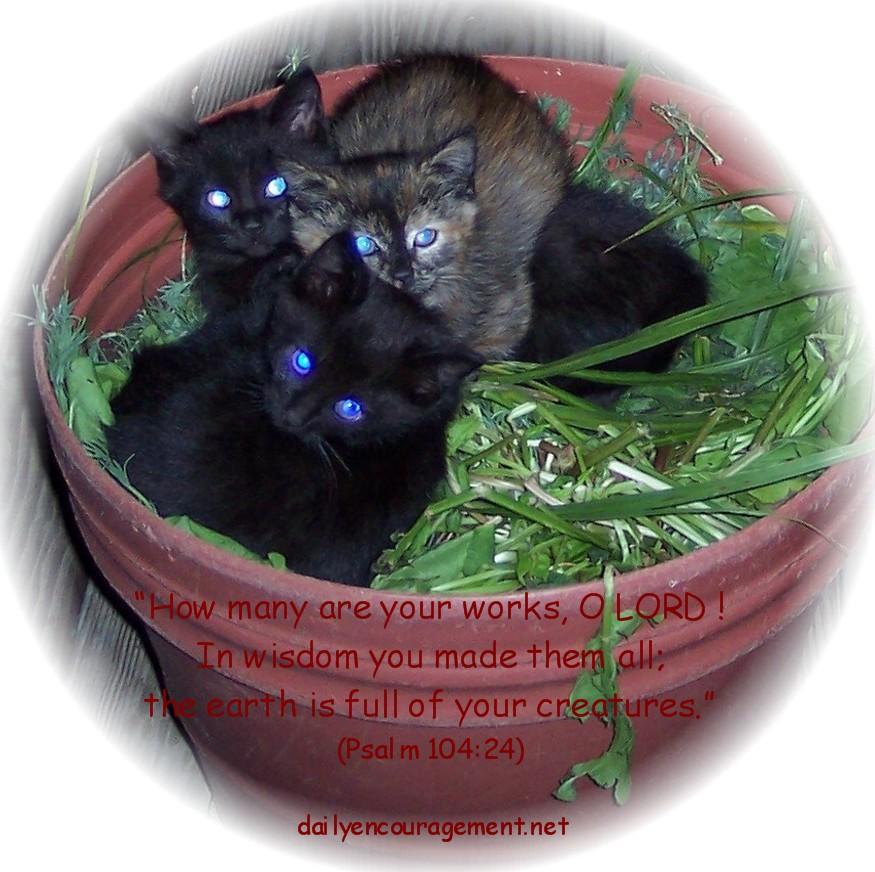 Kittens in planter