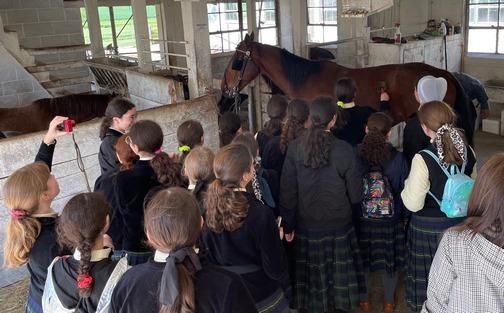 Old Windmill Farm tour