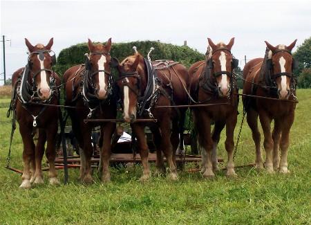 Harvesting alfalfa in Lancaster County PA