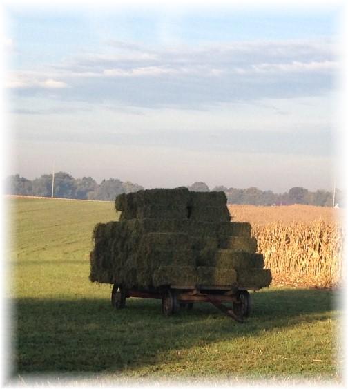 Amish alfalfa wagon