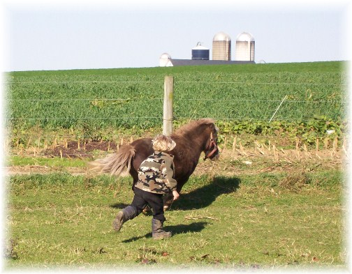 Amish boy chasing pony in Lancaster County, PA 10/25/11