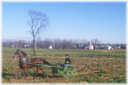 Amish boy racing in field 12/1/11