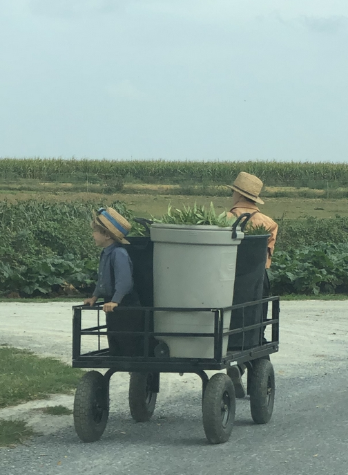 Amish boys on Kraybill Church Road
