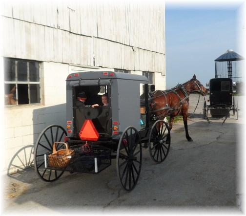 Amish buggie 4/10/13