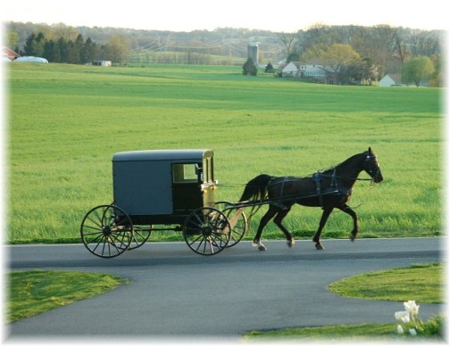 Amish horse and buggy scene (photo by Doris High)