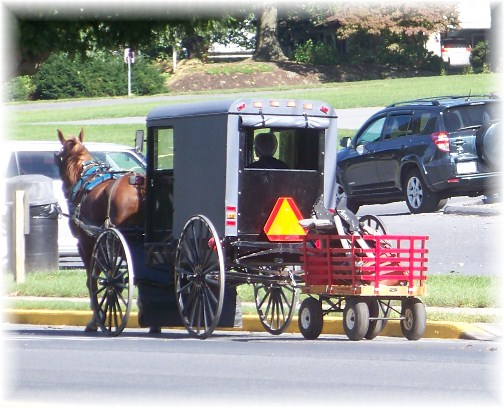 Amish buggy in New Holland