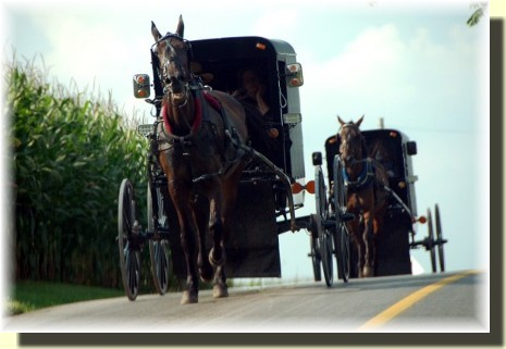 Amish buggy traffic (photo by Doris High)
