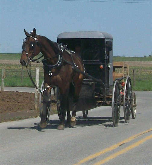 Amish buggy with wagon 4/14/11