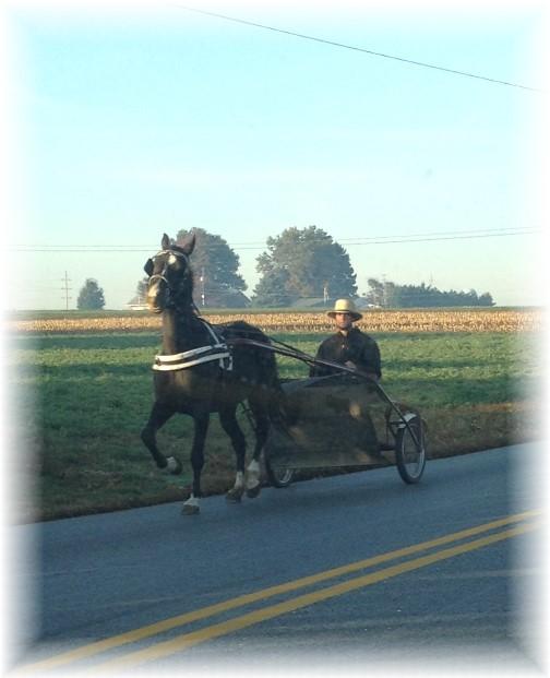 Amish man on cart 10/22/15