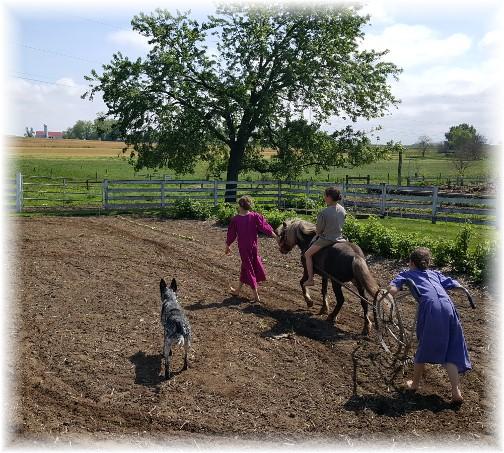 Amish children working garden 5/12/16