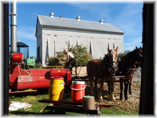 Amish corn harvest 2012