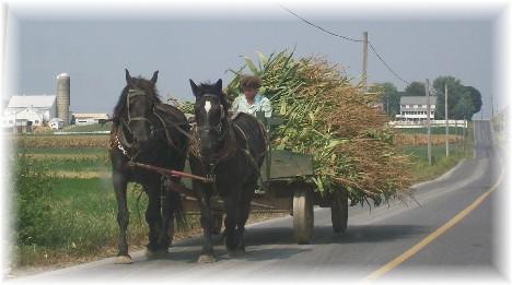 Amish corn wagon, Lancaster County, PA 9/2/10