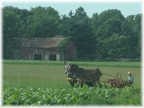 Amish farmer in Lancaster County PA 7/8/14
