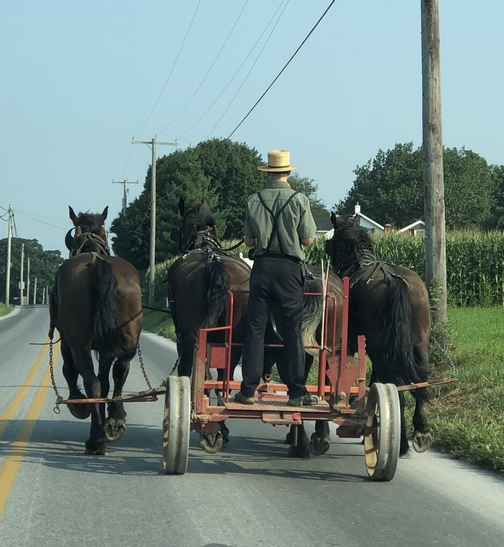 Amish farmer in Lancaster County, PA