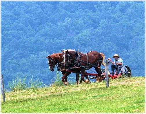Amish farmer in Belleville, PA (Photo by Greg Schneider)