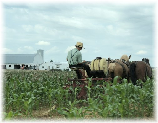 Amish field work, Lancaster County, PA 6/7/18