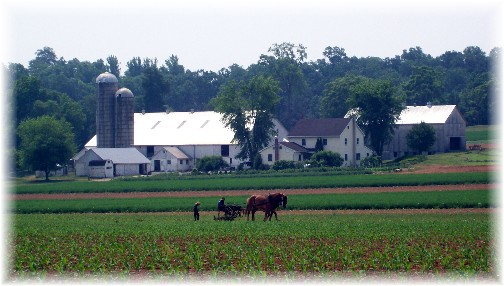 Amish farm in Lancaster County PA 6/9/11