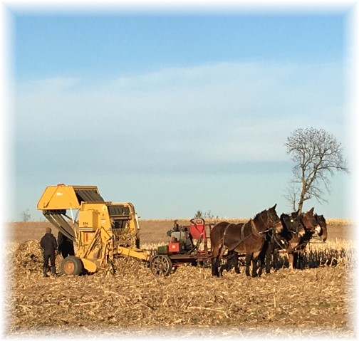 Amish field work, Lancaster County, PA 11/17/17 (Click to enlarge)