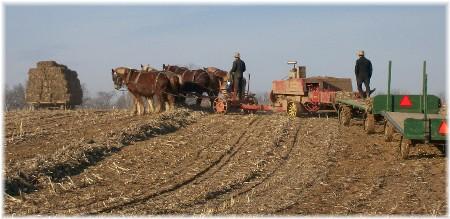 Amish team baling fodder