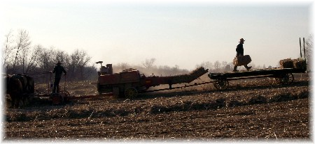 Photo of Amish baling corn fodder