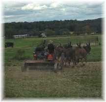 Amish harvest 10/16/15