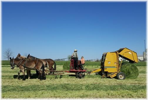 Amish hay harvest 4/20/16