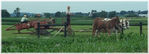 Amish hay harvest 6/25/15