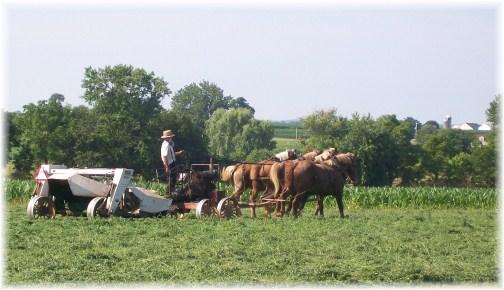 Amish hay harvest 7/13/12