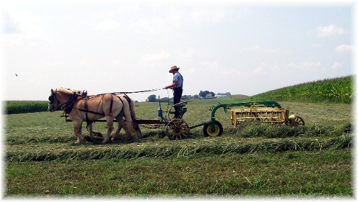 Amish hay raking 8/18/11