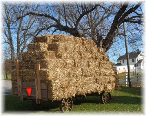 Amish hay wagon, Lancaster County PA 11/14/13