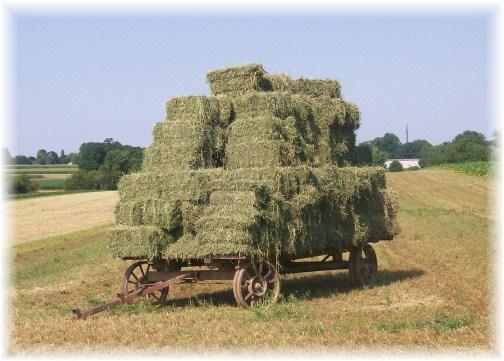 Amish hay wagon 7/13/12