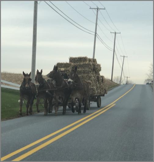 Amish hay wagon 11/30/18