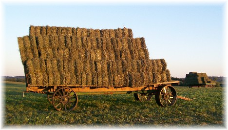 Lancaster County Amish hay wagons
