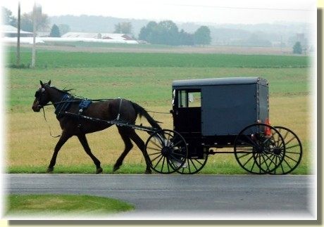 Amish horse and buggy (Photo by Doris High)
