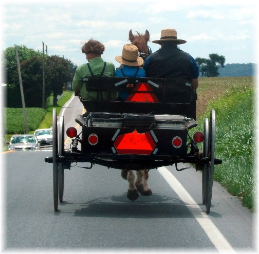 Amish open buggy with father and sons 8/17/13