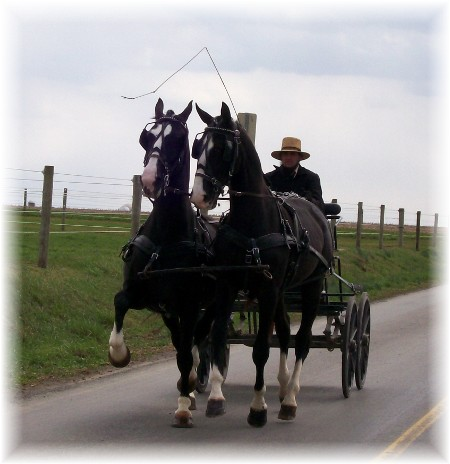 Amish open cart