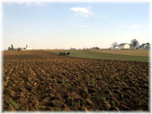 Amish team plowing field near Mount Joy, PA 2/18/12