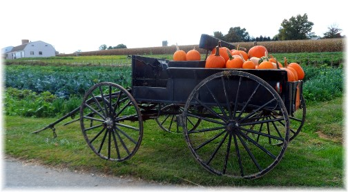 Amish wagon with pumpkins