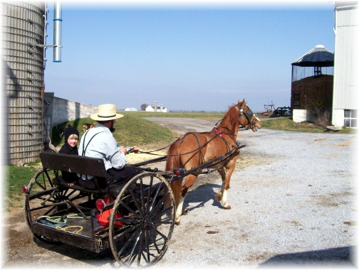Amish spring wagon