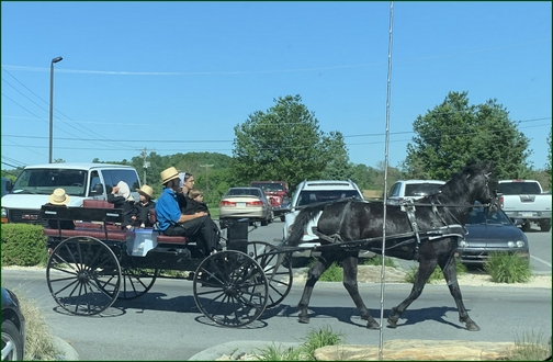 Amish family in spring wagon 5/24/19 (Click to enlarge)
