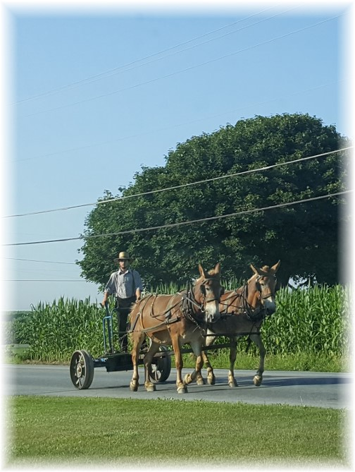 Amish team on Strasburg Pike
