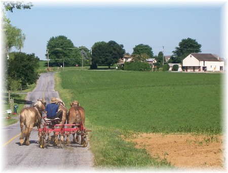 Amish Team cultivating corn
