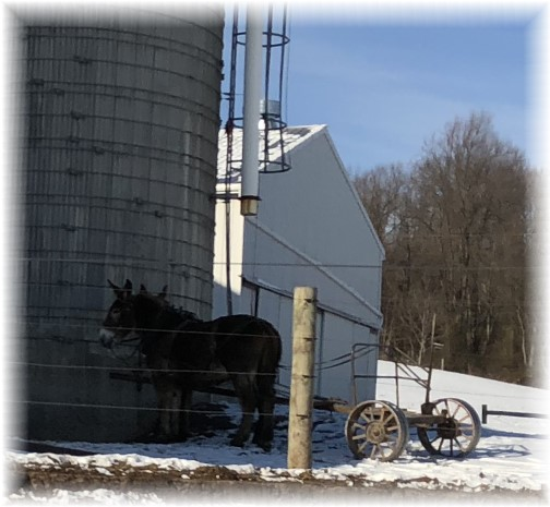 Amish team in snow, Harvest Road 1/2/18
