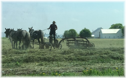 Amish team raking hay near New Holland, PA 4/27/17