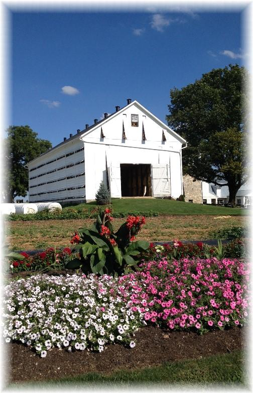 Tobacco barn on Amish farm, Lancaster County PA 8/25/15