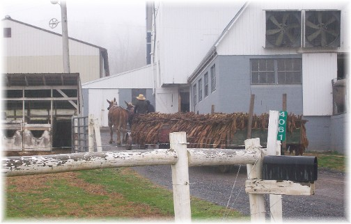 Amish tobacco wagons 12/6/11