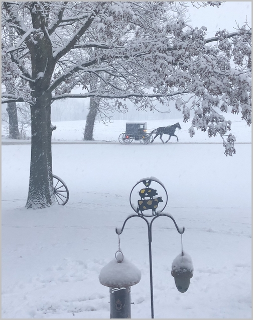 Amish horse and buggie in snowstorm 1/29/19