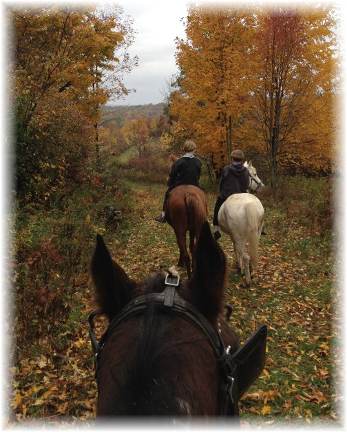 Trail horseride with Amish boys in New York 10/18/14