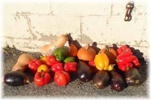 Amish vegetable harvest