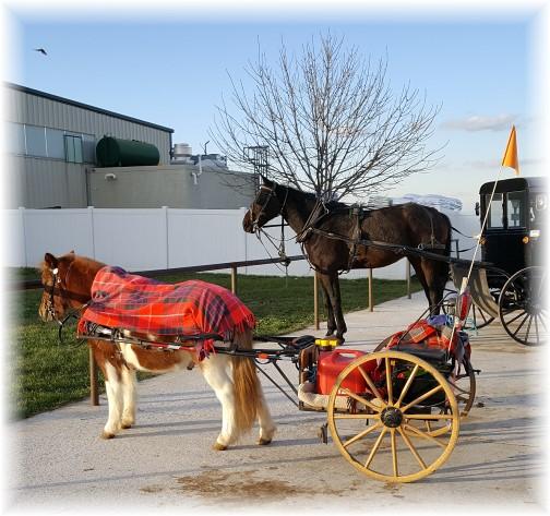 Amish Walmart parking 12/8/16
